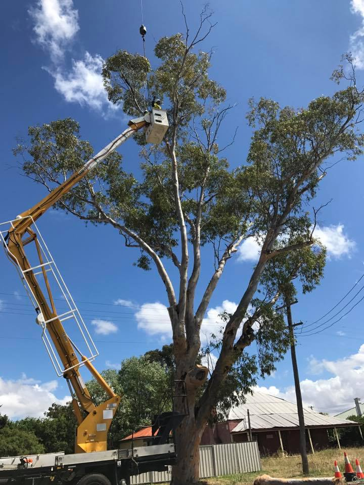 dubbo tree trimming
